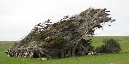 twisted-trees-slope-point-new-zealand-south-island-1